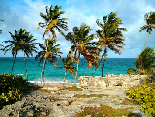 A rocky beach in Barbados, with palm trees and a blue sea in the background
