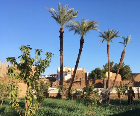 An African farm with grass and palm trees in the foreground, with buildings behind, beneath a clear blue sky