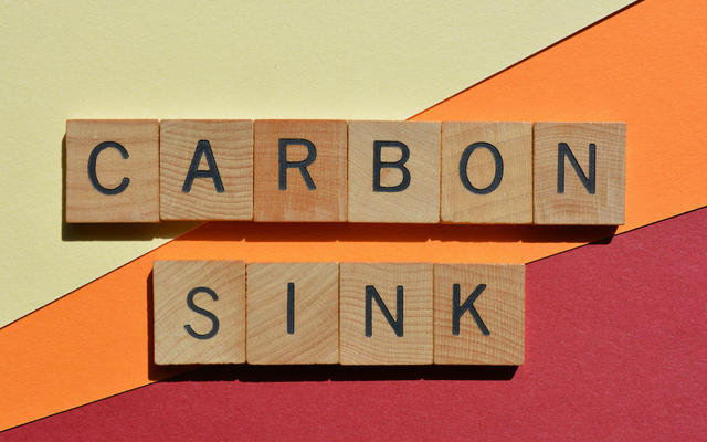 The words 'Carbon sink' in wooden characters