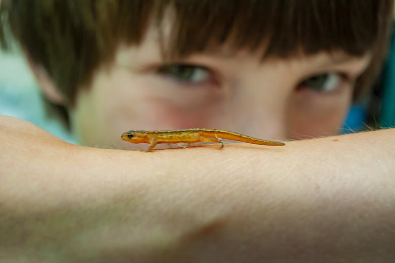 Boy with a salamander on his arm