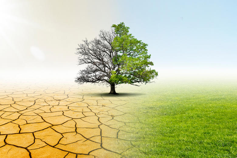 A split photo, the left is half of a leafless tree on parched, cracked earth, the right is the other half of the tree, in full leaf on a green fieldtterstock
