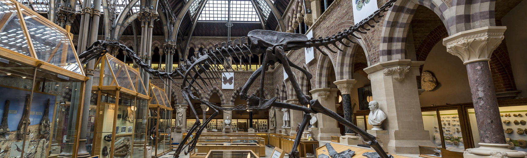 A dinosaur sekelton in the Natural History Museum, Oxford