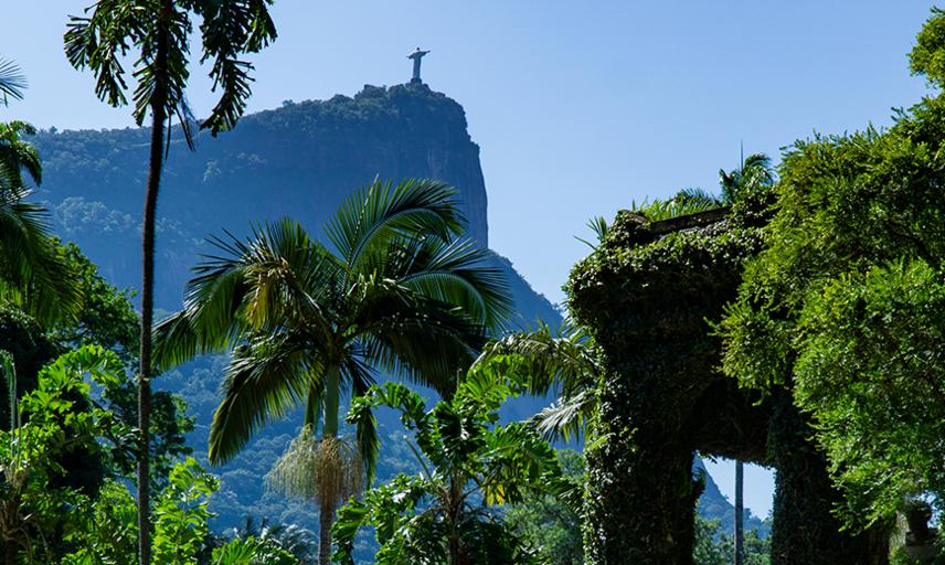 Botanical wonders of Brazil