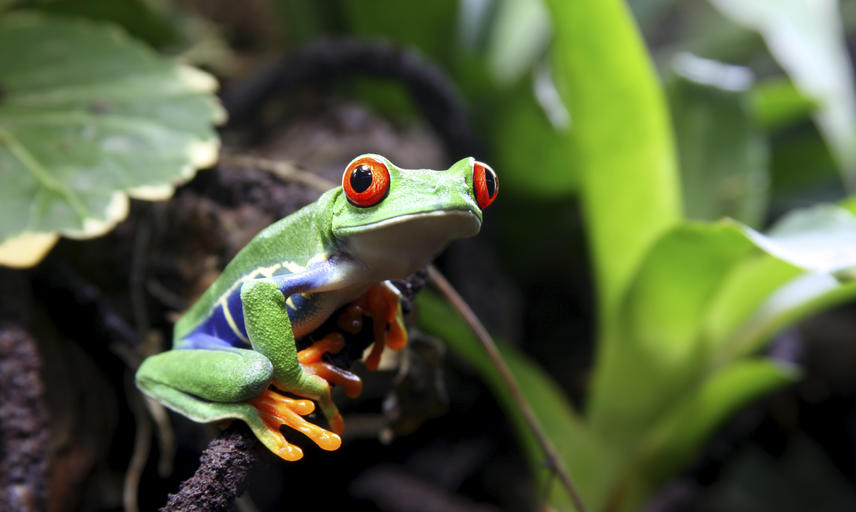 A tree frog sat on a small branch, surrounded by foliage