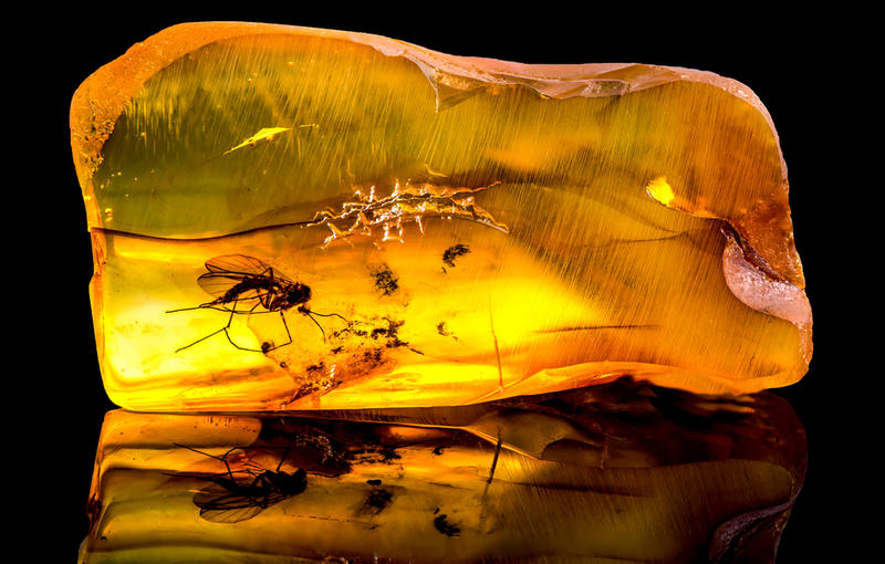 A lump of Baltic amber containing a trapped mosquito