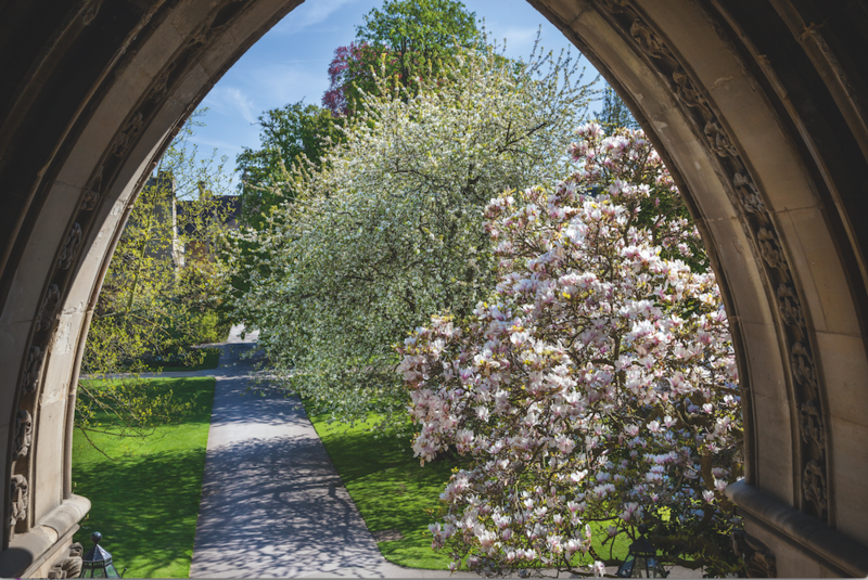 A view through an archway of two trees in blossom