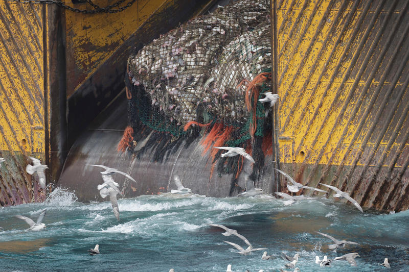 A bottom trawler, with a large net of fish being pulled onboard