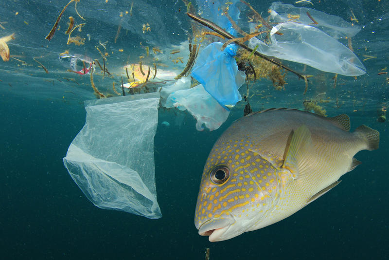Tropical fish swimming near plastic bags