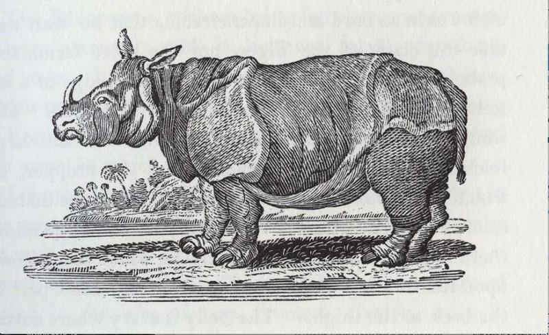 A drawing of a rhino