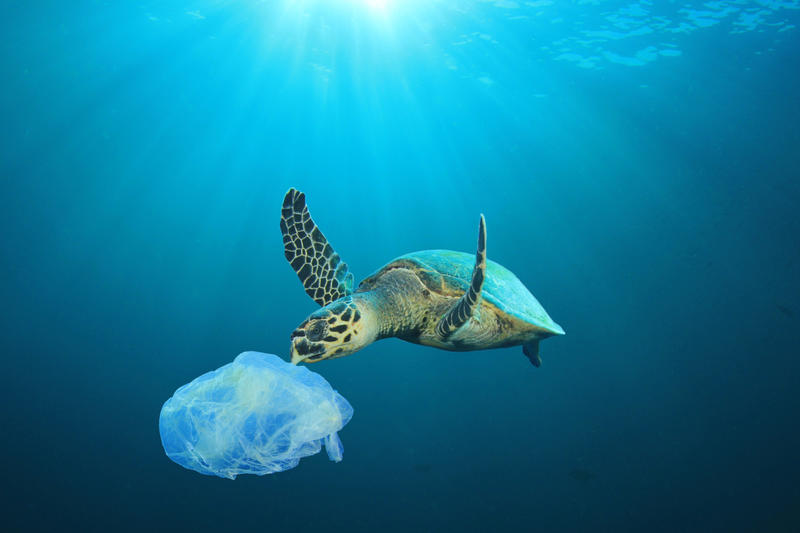 A Sea Turtle approaches a piece of suspended plastic in the sea
