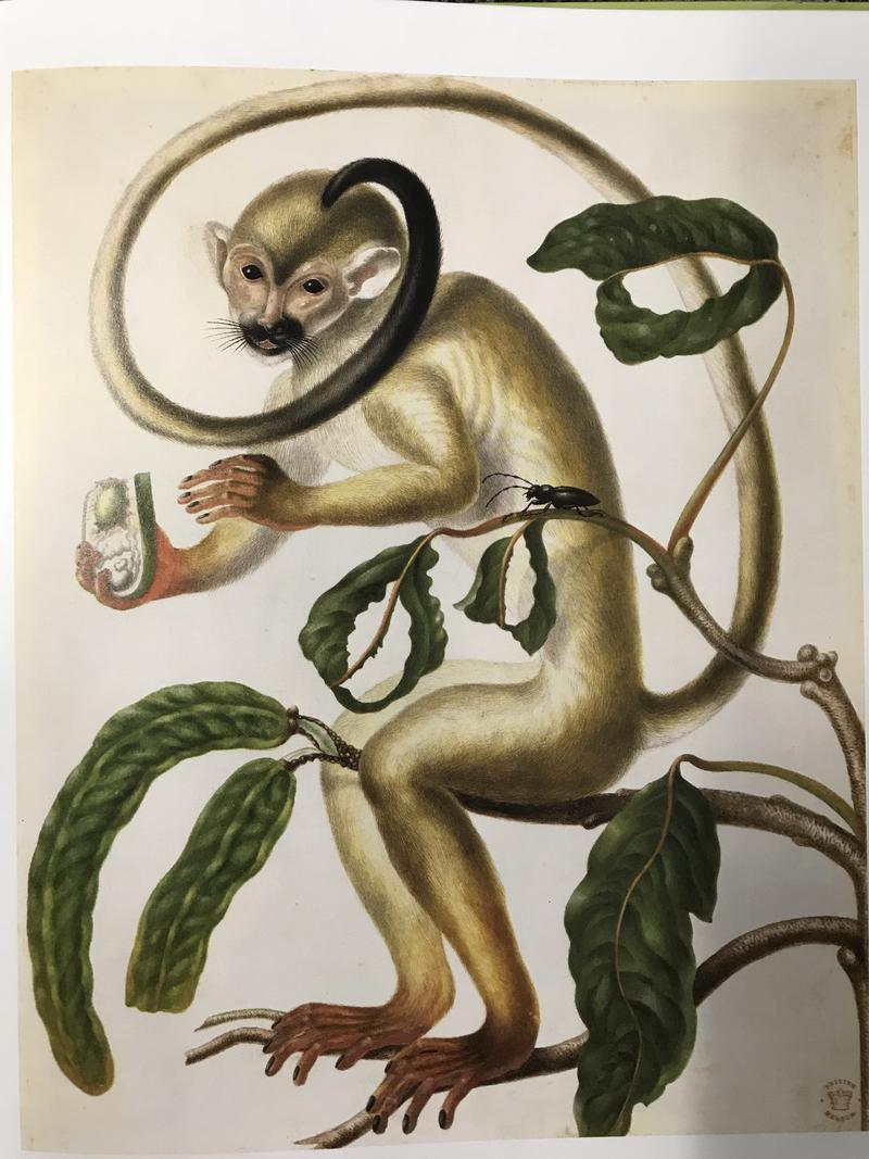 A painting of a Shimbillo Tree with a Squirrel Monkey